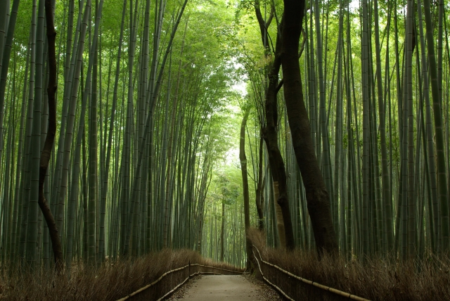 竹林の小径/Road of Bamboo Forest